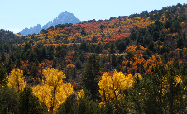 Fall color along County Road 7