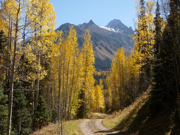 Fall color with Mt. Sneffels