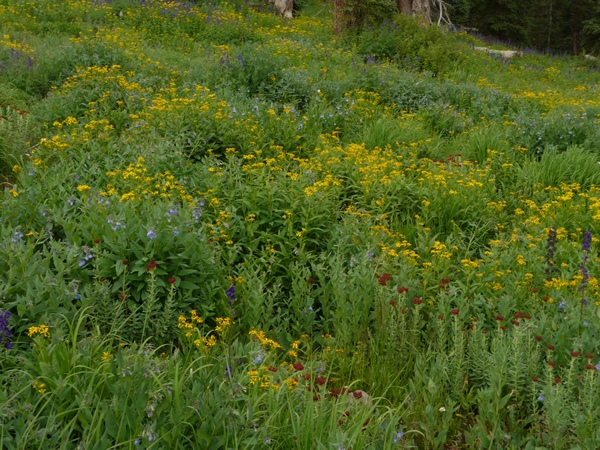 wildflower profusion