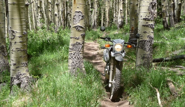 narrow aspen trail