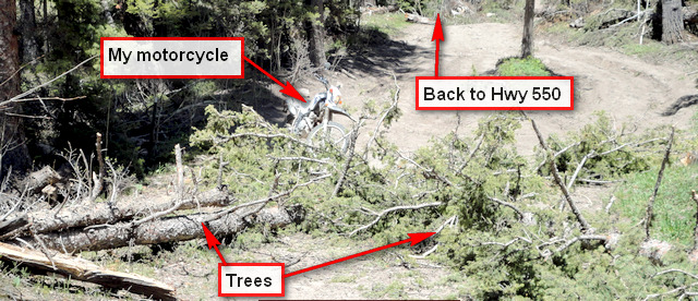 Trees block Ouray County Road 9