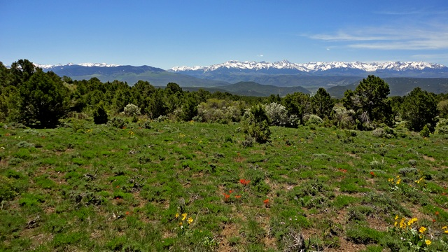 The Colorado wildflowers are in bloom at lower elevations.