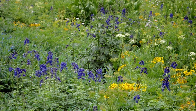 More wildflowers, about a hundred yards beyond where most people stop to see Twin Falls.
